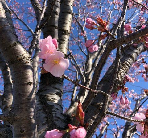 春の予感…🌸